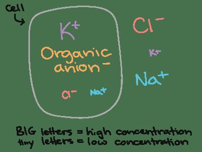 Organic Anion