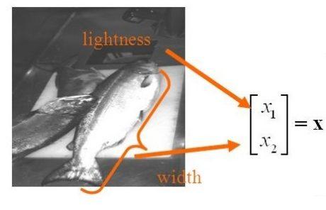 ویژگی های ماهی در کلاس بندی