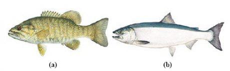 کلاسبندی ماهی ها