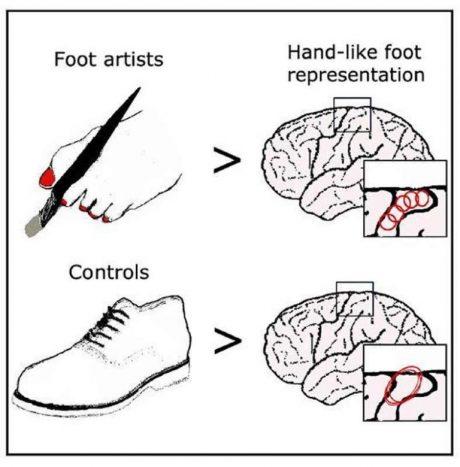 هنرمندانی که از پایشان برای نقاشی کردن استفاده میکنند، نقشه حرکتی پا را در مغز دارند