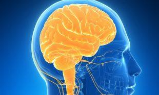 تاثیرات ویروس کرونا بر روی مغز