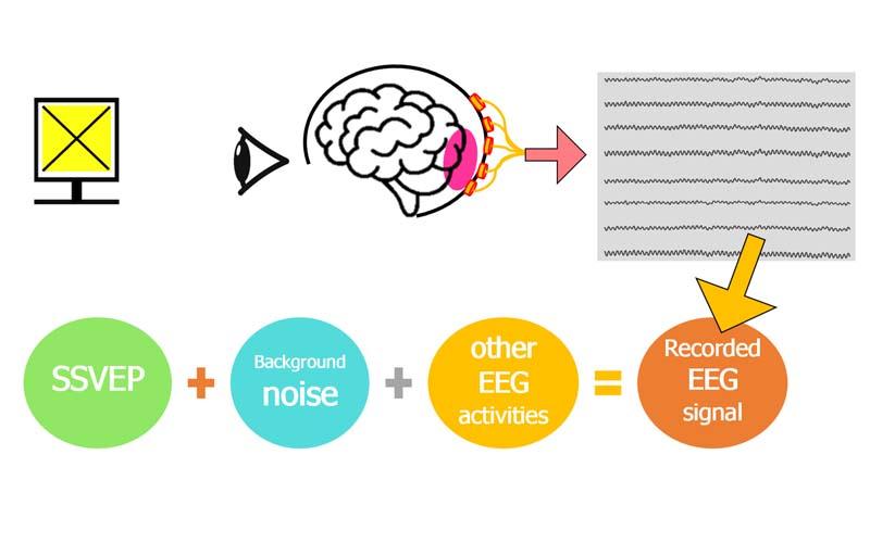 پردازش سیگنال مغزی مبتنی بر SSVEP