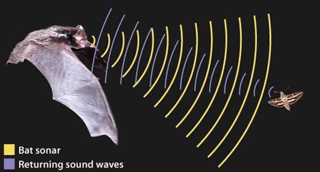سیستم سونار خفاش